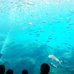 Webチケットで待たずにうみの杜水族館に入れるんだってば!