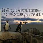 普通に、うみの杜水族館のペンギンに癒されてきました