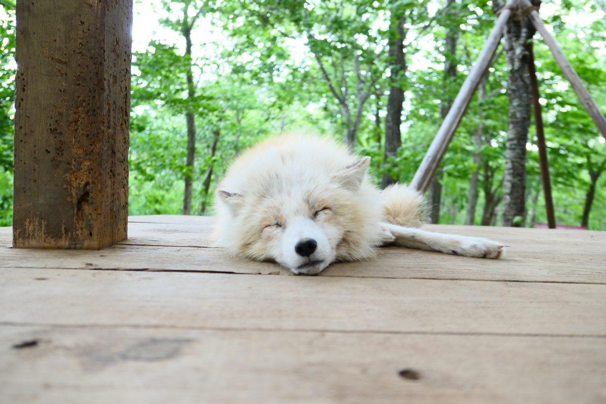 疲れたので素直にブログ更新休んでいました