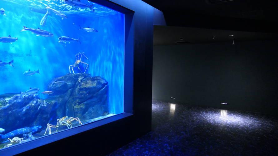 仙台うみの杜水族館で2度目の年間パスポート更新