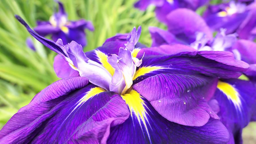 多賀城跡あやめまつりは花を見るだけかと思ったら大間違いでした