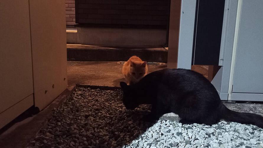 アパート前の猫